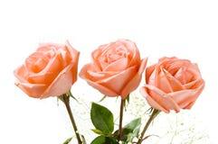 trzy róże Obrazy Royalty Free