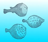Trzy różnego blowfishes na niebieskozielonym gradientowym tle &-x28; po dziejowej lub rocznika woodcut ilustraci Fotografia Royalty Free