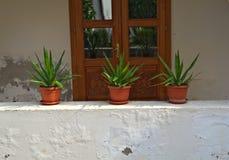 Trzy rośliny w flowerpots na półce przed drzwi Obrazy Royalty Free
