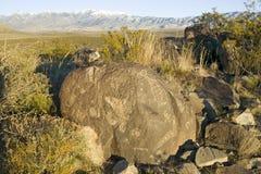 Trzy rzek petroglifu Krajowy miejsce, a biuro Gruntowy zarządzania miejsce, cechy więcej niż 21.000 rodowitych amerykan indianina zdjęcia royalty free