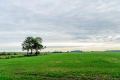 Trzy samotnego drzewa w płaskim wiejskim krajobrazie Obraz Stock