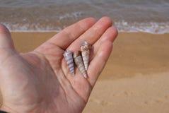 Trzy seashells w ręce przy plażą zdjęcie royalty free