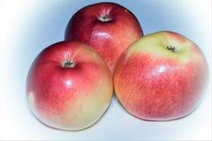 Trzy smakowity, dojrzali świezi jabłka na białym tle odizolowywającym obraz stock