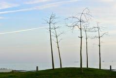 Trzy smutnego drzewa fotografia royalty free