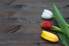 Trzy stubarwnego tulipanu przeciw tłu ciemne deski obraz stock
