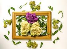 Trzy suchej róży z liśćmi, dwa białej róży, jeden menchii róża zdjęcia stock