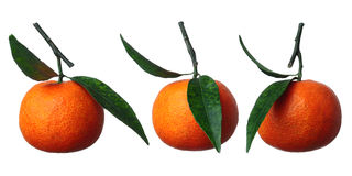 Trzy Tangerines Obrazy Stock