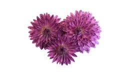 Trzy to samo kwiat obrazy stock