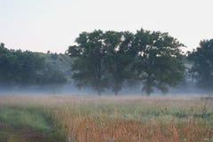 Trzy topoli w ranek mgle w polach blisko wzgórzy Zdjęcia Royalty Free