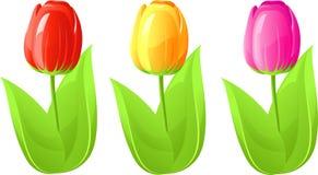 trzy tulipan ilustracji