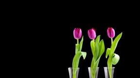 trzy tulipanu Obrazy Stock
