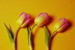 trzy tulipanu Fotografia Stock