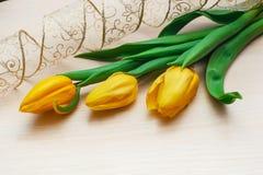 Trzy tulipanu i pięknego delikatnego faborek Zdjęcia Royalty Free