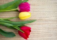 Trzy tulipanu na bambus powierzchni Zdjęcia Stock