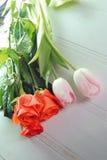 Trzy tulipanu na białym tle Zdjęcie Royalty Free