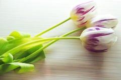 Trzy tulipanu na białym tle Obraz Stock