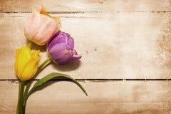 Trzy tulipanu Na Drewnianym rocznika skutku Zdjęcie Royalty Free