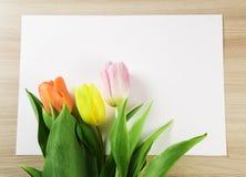 Trzy tulipanu różni kolory na prześcieradle papier Fotografia Royalty Free