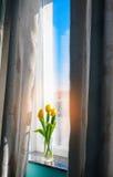 Trzy tulipanu w szklanej wazie Zdjęcie Royalty Free