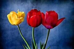 Trzy tulipanu z rocznika skutkiem dodającym Zdjęcia Stock