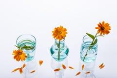 Trzy wazowy i kwiaty na białym tle. Obrazy Royalty Free