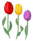 Trzy wektorów tulipan dla wiosna projekta w czerwieni, kolorze żółtym i menchiach z świetnym cieniem, Zdjęcia Royalty Free