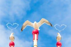 Trzy wielkiego seagulls obraz stock