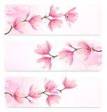 Trzy wiosna sztandaru z okwitnięcia śniadanio-lunch różowi kwiaty Obrazy Stock