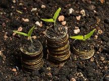 Trzy ziarna z monetą w glebowej złotej monecie Fotografia Royalty Free