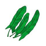 Trzy zielonego liścia kobylak również zwrócić corel ilustracji wektora Zdjęcie Stock