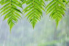 Trzy zielonego liścia z wody kroplą od deszczu zdjęcia stock