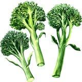 Trzy zielony bimi, brokuły odizolowywający, na białym tle ilustracji