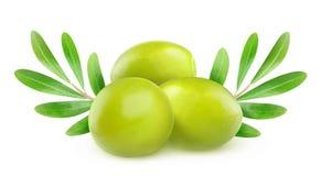Trzy zielonych oliwki, gałąź i liścia, obrazy stock
