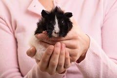 Trzymać mój królika doświadczalnego Zdjęcie Royalty Free