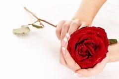 trzymać różanej kobiety Obrazy Royalty Free