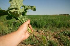 Trzymać rośliny w ręce Fotografia Stock