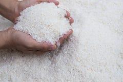 Trzymać ryż z rękami Fotografia Royalty Free
