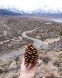 Trzymać sosnowego rożek światło z wijącą drogą Nevada i sierra zdjęcia stock