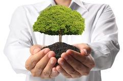 Zielony drzewo w ręce Fotografia Royalty Free