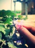 Trzymać kwiatu Obraz Stock