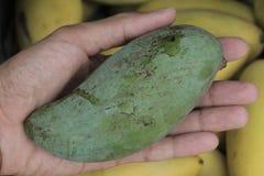 Trzyma zielonego mango na ręce nad koloru żółtego mango na owocowym Azja Fotografia Stock