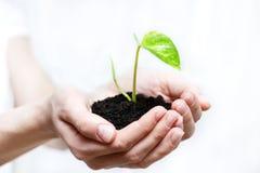 trzymający rośliny mały Obraz Stock