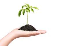 Trzymający rośliny odizolowywający Fotografia Stock
