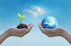 Trzymający ziemskiego i zielonego drzewa w rękach, światowego środowiska dnia pojęcie, ratuje narastającego młodego drzewa