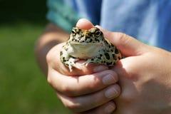 trzymaj żaby młodzieży. Zdjęcie Royalty Free