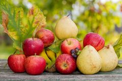 Fruits outdoor Royalty Free Stock Photography