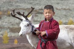 Tsaatan boy, dressed in a traditional deel with a reindeer in a Stock Photography