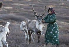 Tsaatan kvinna med renen i nordligt mongoliskt landskap Arkivfoto
