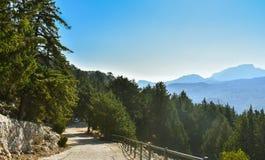 Tsampika-Wald von der Spitze des Berges lizenzfreie stockbilder