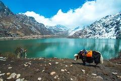 Tsangmo sjö i Sikkim, Indien Fotografering för Bildbyråer